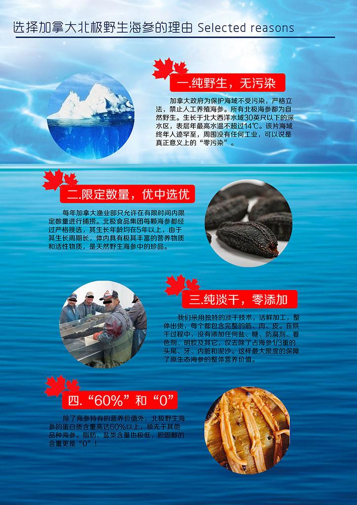 加拿大北极野生海参销售推广手册3.jpg
