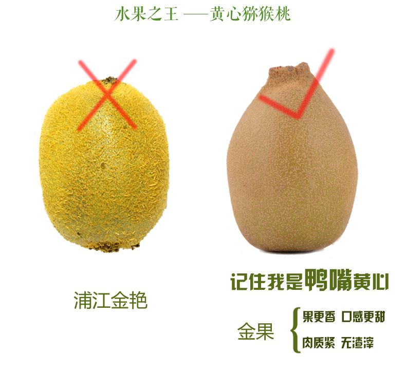 鸭嘴黄心猕猴桃1.jpg
